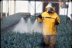 Pest Management and Pesticides